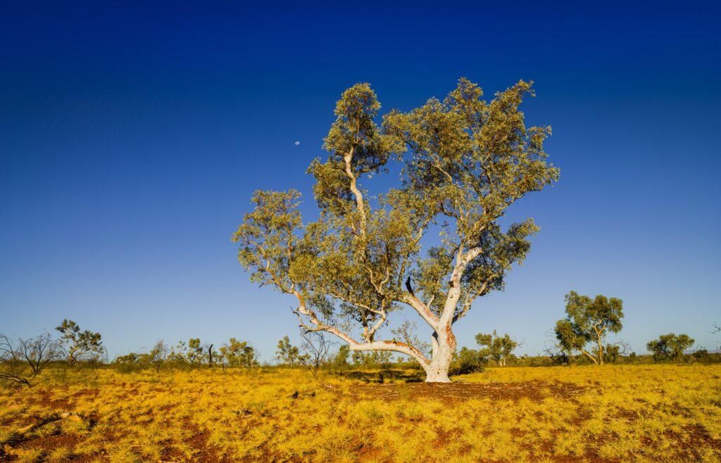 Land Development Adelaide